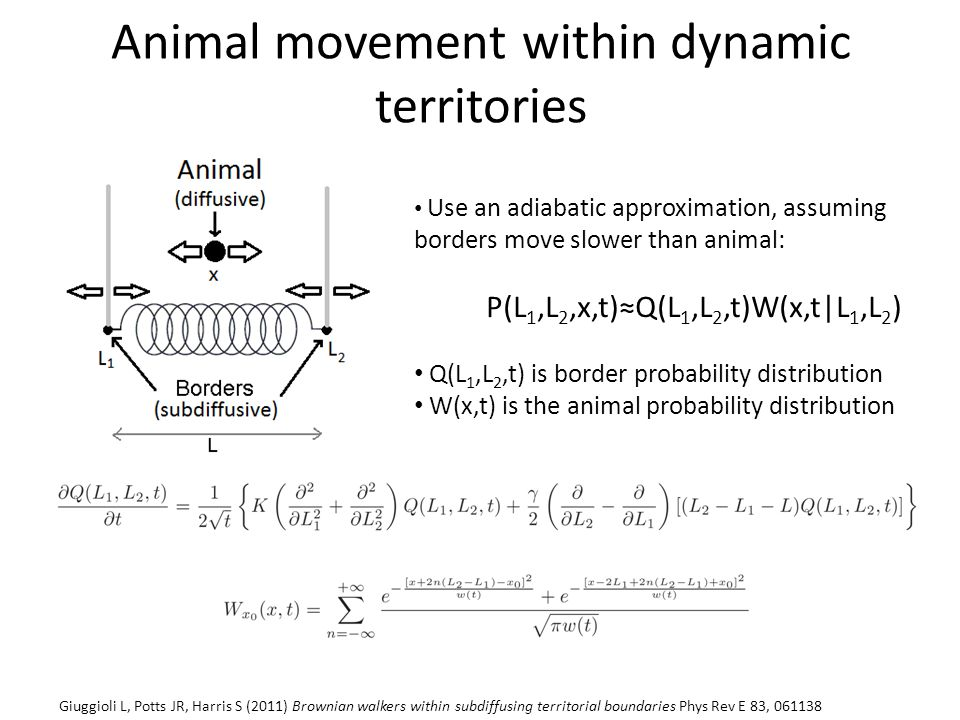 Animal movement within dynamic territories Use an adiabatic approximation, assuming borders move slower than animal: P(L 1,L 2,x,t)≈Q(L 1,L 2,t)W(x,t|