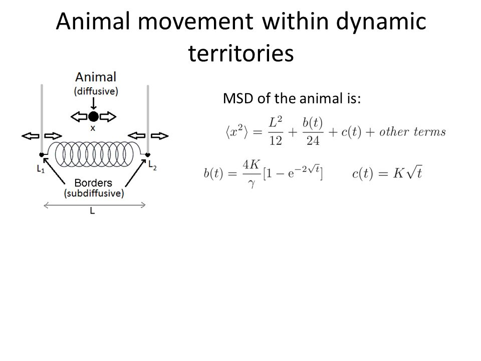 Animal movement within dynamic territories MSD of the animal is: