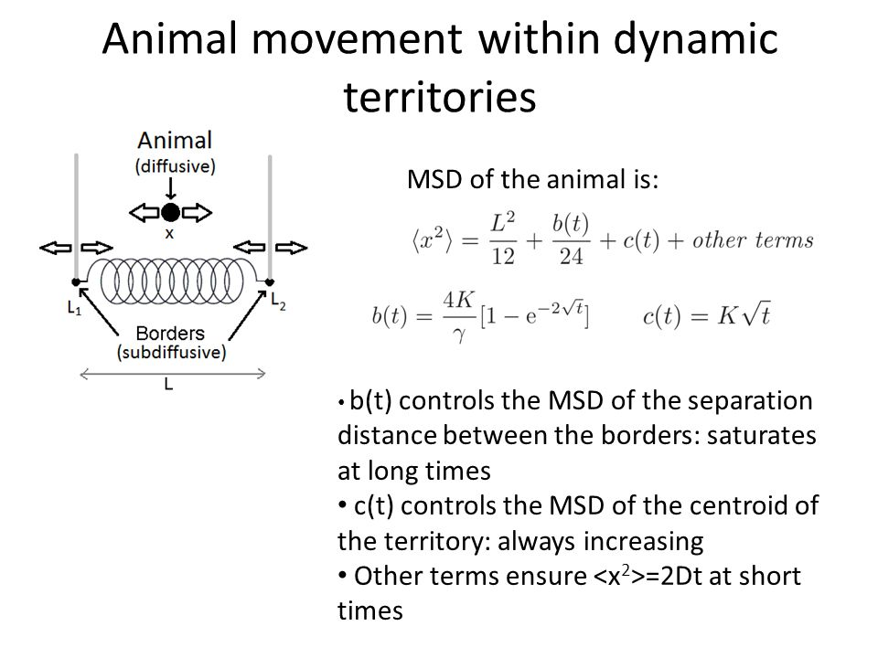 Animal movement within dynamic territories MSD of the animal is: b(t) controls the MSD of the separation distance between the borders: saturates at lo