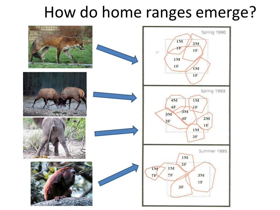 How do home ranges emerge?