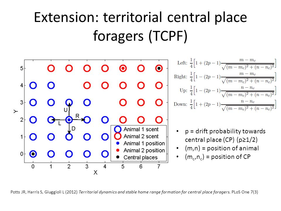 Extension: territorial central place foragers (TCPF) p = drift probability towards central place (CP) (p≥1/2) (m,n) = position of animal (m c,n c ) =
