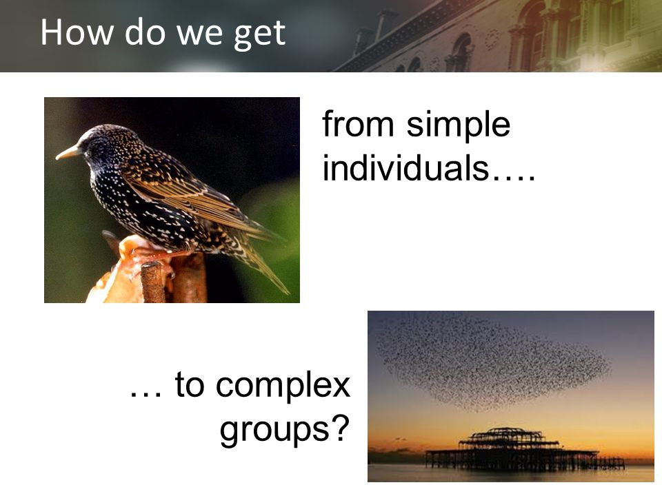from simple individuals…. How do we get … to complex groups