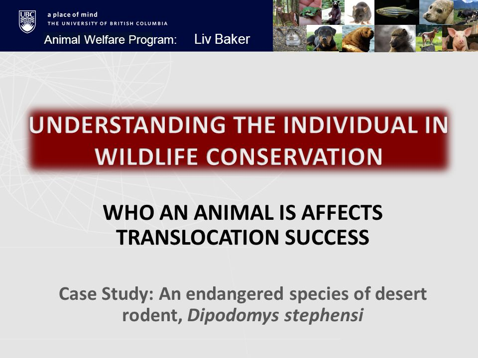 WHO AN ANIMAL IS AFFECTS TRANSLOCATION SUCCESS Case Study: An endangered species of desert rodent, Dipodomys stephensi Animal Welfare Program: Liv Baker