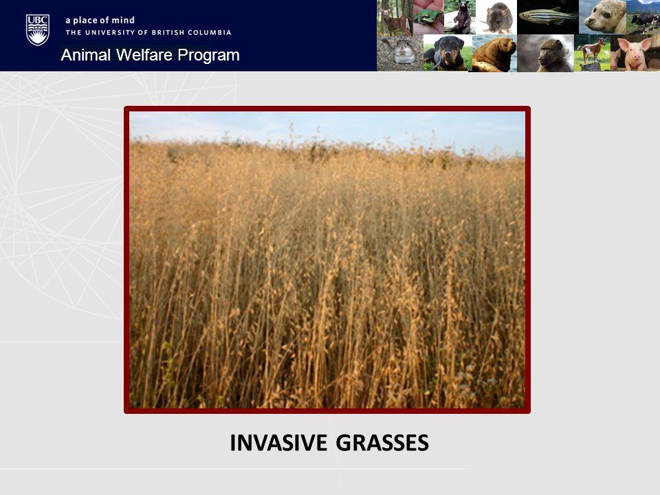INVASIVE GRASSES Animal Welfare Program