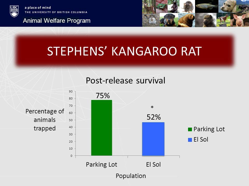 STEPHENS' KANGAROO RAT