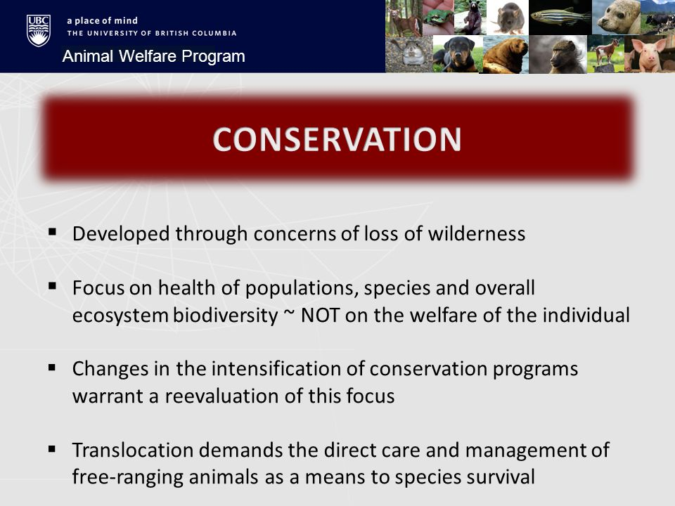 Animal Welfare Program  Developed through concerns of loss of wilderness  Focus on health of populations, species and overall ecosystem biodiversity ~ NOT on the welfare of the individual  Changes in the intensification of conservation programs warrant a reevaluation of this focus  Translocation demands the direct care and management of free-ranging animals as a means to species survival