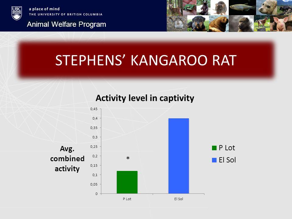 Animal Welfare Program STEPHENS' KANGAROO RAT *