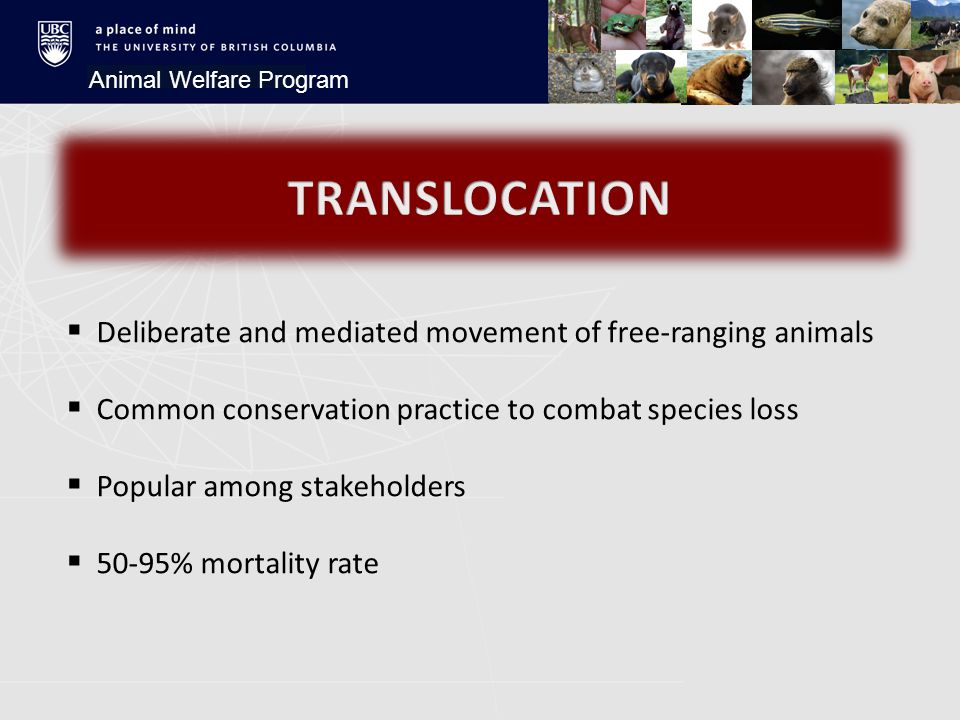 Animal Welfare Program  Deliberate and mediated movement of free-ranging animals  Common conservation practice to combat species loss  Popular among stakeholders  50-95% mortality rate