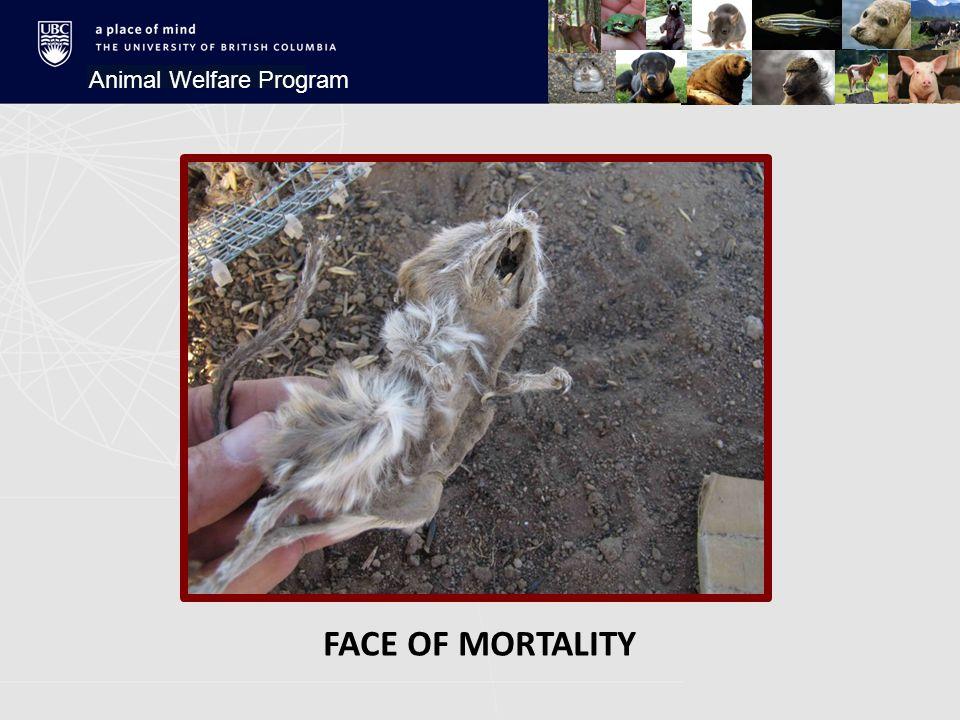 FACE OF MORTALITY Animal Welfare Program