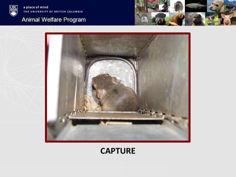 CAPTURE Animal Welfare Program