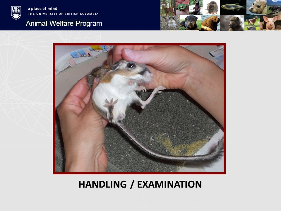 Animal Welfare Program FINDINGS  Home environment matters  Cortisol matters  Activity level matters  Behavioural response matters STEPHENS' KANGAROO RAT
