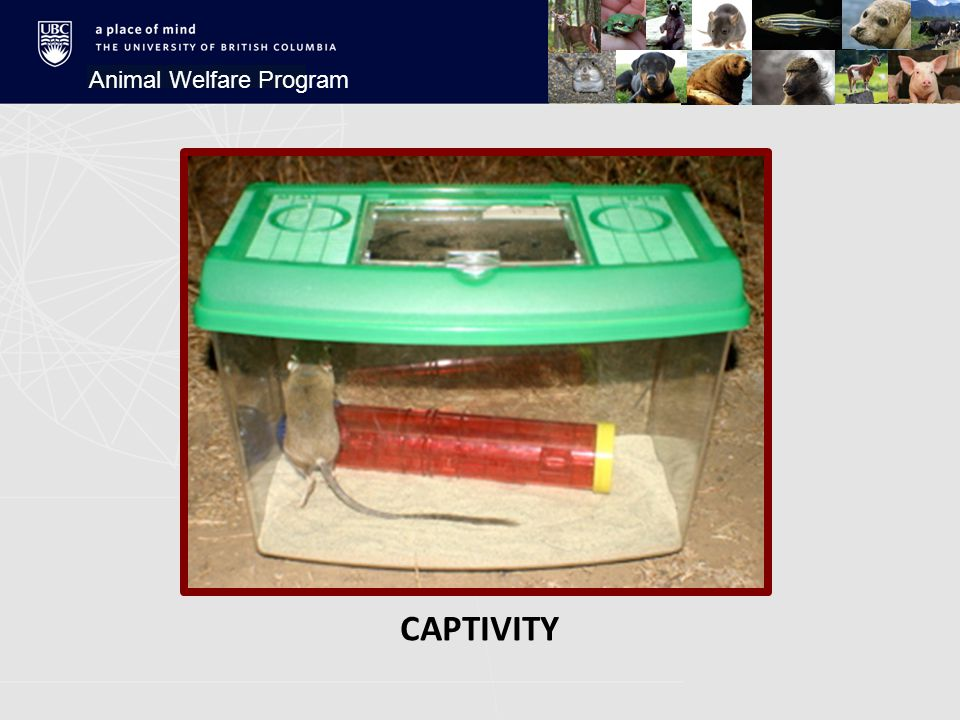 CAPTIVITY Animal Welfare Program