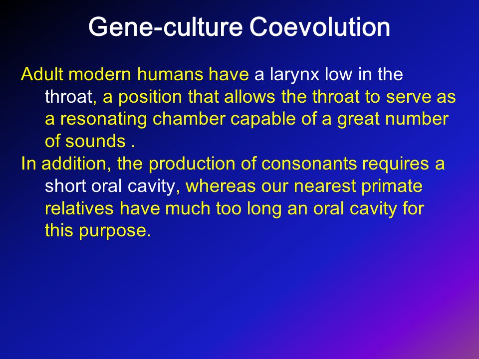 Gene-culture Coevolution Adult modern humans have a larynx low in the throat, a position that allows the throat to serve as a resonating chamber capab