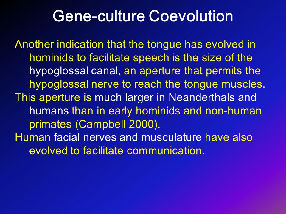 Gene-culture Coevolution Another indication that the tongue has evolved in hominids to facilitate speech is the size of the hypoglossal canal, an aper