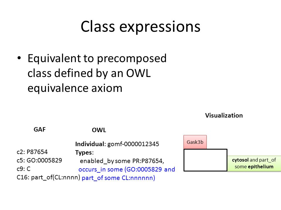 Class expressions Equivalent to precomposed class defined by an OWL equivalence axiom Individual: gomf-0000012345 Types: enabled_by some PR:P87654, occurs_in some (GO:0005829 and part_of some CL:nnnnnn) OWL GAF Visualization c2: P87654 c5: GO:0005829 c9: C C16: part_of(CL:nnnn) cytosol and part_of some epithelium Gask3b