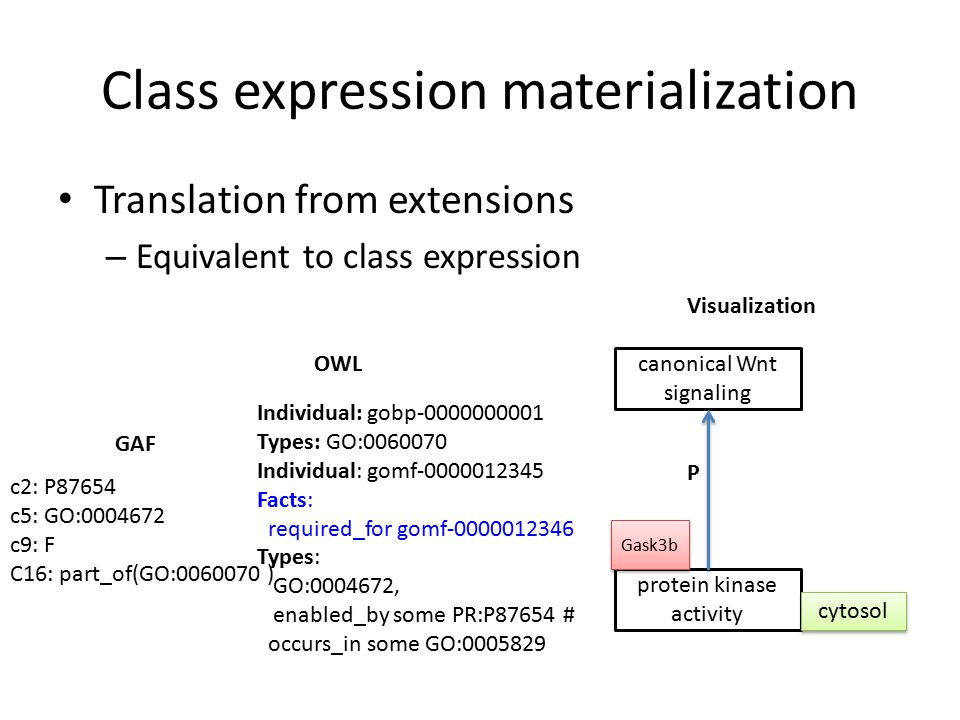 Class expression materialization Translation from extensions – Equivalent to class expression Individual: gobp-0000000001 Types: GO:0060070 Individual: gomf-0000012345 Facts: required_for gomf-0000012346 Types: GO:0004672, enabled_by some PR:P87654 # occurs_in some GO:0005829 OWL GAF c2: P87654 c5: GO:0004672 c9: F C16: part_of(GO:0060070 ) Visualization protein kinase activity canonical Wnt signaling P Gask3b cytosol