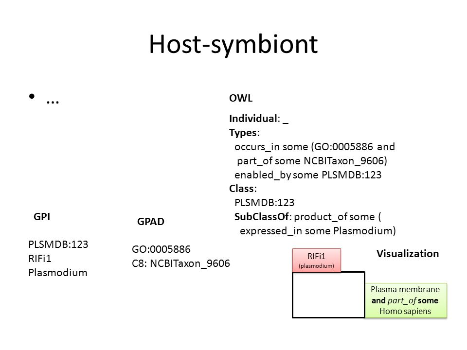 Host-symbiont … Individual: _ Types: occurs_in some (GO:0005886 and part_of some NCBITaxon_9606) enabled_by some PLSMDB:123 Class: PLSMDB:123 SubClassOf: product_of some ( expressed_in some Plasmodium) OWL GPAD Visualization GO:0005886 C8: NCBITaxon_9606 Plasma membrane and part_of some Homo sapiens RIFi1 (plasmodium) RIFi1 (plasmodium) GPI PLSMDB:123 RIFi1 Plasmodium