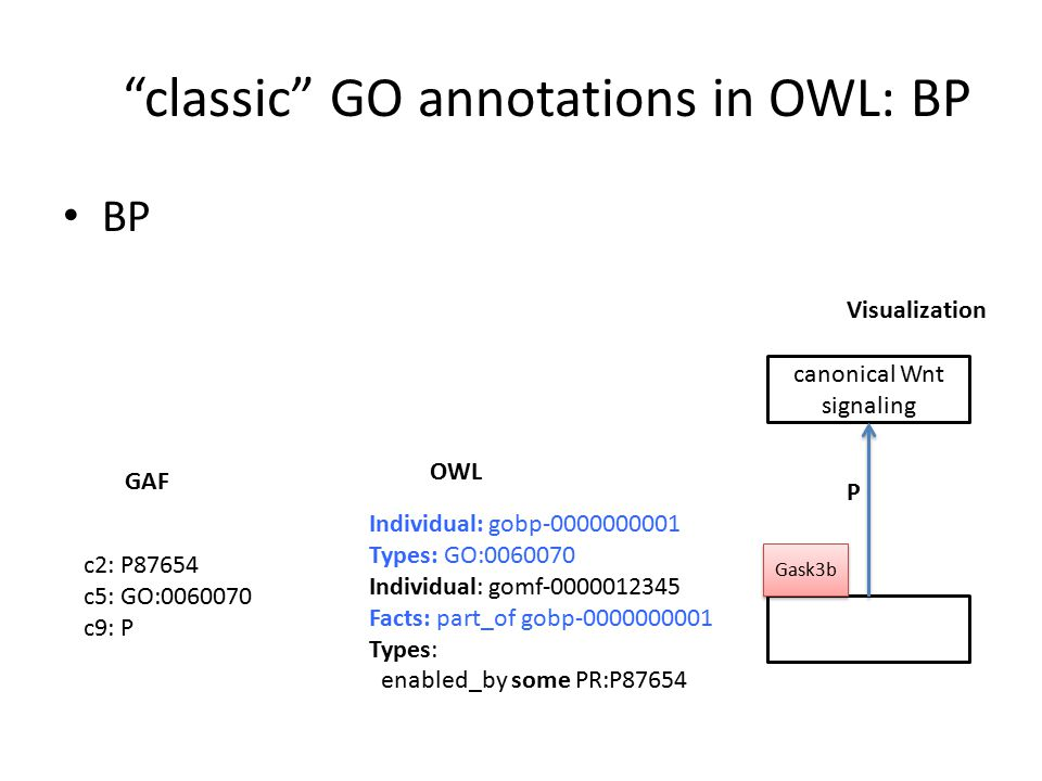 classic GO annotations in OWL: BP BP Individual: gobp-0000000001 Types: GO:0060070 Individual: gomf-0000012345 Facts: part_of gobp-0000000001 Types: enabled_by some PR:P87654 OWL GAF Visualization c2: P87654 c5: GO:0060070 c9: P canonical Wnt signaling P Gask3b