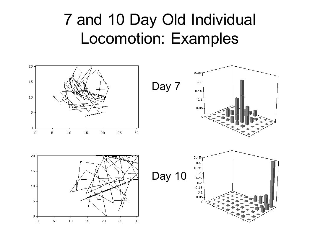 7 and 10 Day Old Individual Locomotion: Examples Day 7 Day 10