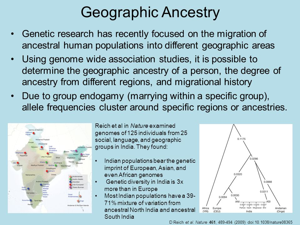 Geographic Ancestry Genetic research has recently focused on the migration of ancestral human populations into different geographic areas Using genome wide association studies, it is possible to determine the geographic ancestry of a person, the degree of ancestry from different regions, and migrational history Due to group endogamy (marrying within a specific group), allele frequencies cluster around specific regions or ancestries.
