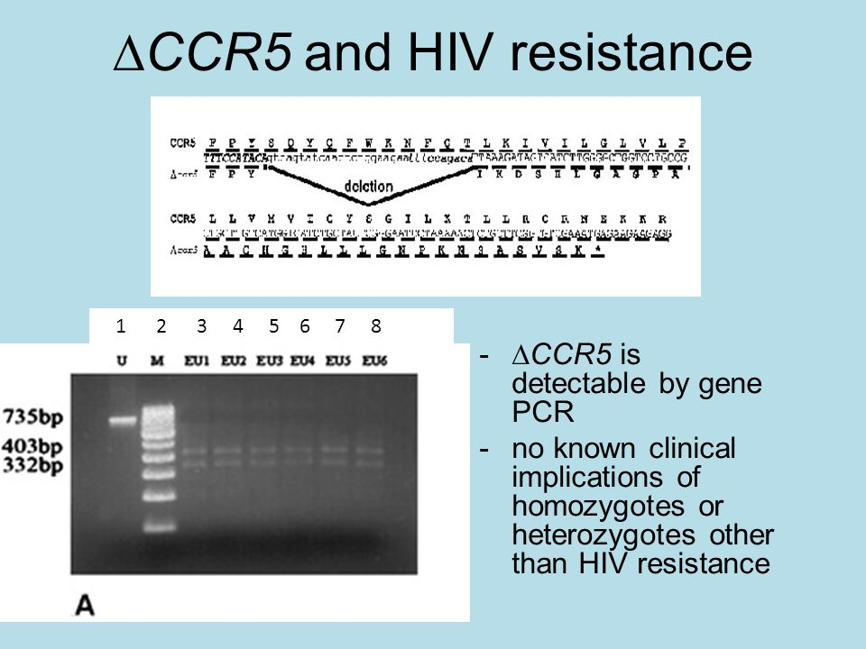  CCR5 and HIV resistance www.cdc.govwww.cdc.gov, accessed 10/8/12 1 2 3 4 5 6 7 8 -  CCR5 is detectable by gene PCR -no known clinical implications of homozygotes or heterozygotes other than HIV resistance