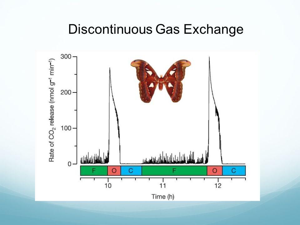 Discontinuous Gas Exchange