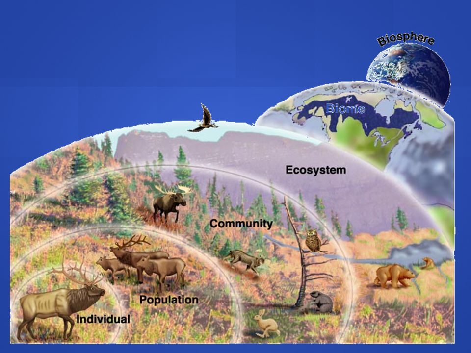 Diversity of Living Things *Classify organisms by fossil records *Classify organisms by fossil records *Evolutionary Characteristics *Evolutionary Characteristics *Hierarchy of Matter: *Hierarchy of Matter: atom, molecule, organelle, atom, molecule, organelle, cell, tissue, organ, organ system, and organism cell, tissue, organ, organ system, and organism