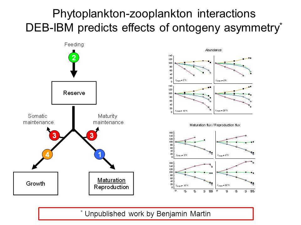 DEB-IBM predicts effects of ontogeny asymmetry * * Unpublished work by Benjamin Martin