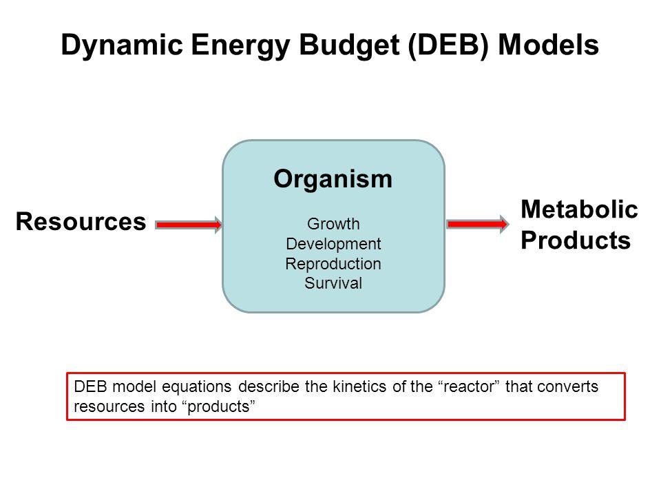 Kooijman's standard DEB model Feces J EA MEME MVMV MVMV somatic maintenance growth  1-  Maturity Maintenance M H M ER Maturity or Reproduction J EC Food Reserve Mobilization X