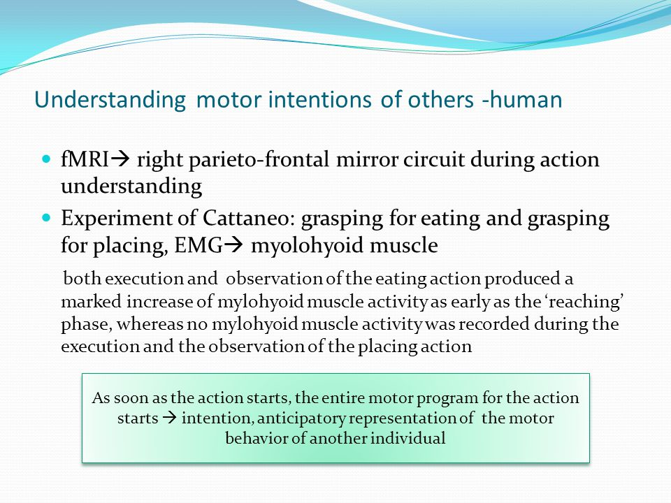 Understanding motor intentions of others -human fMRI  right parieto-frontal mirror circuit during action understanding Experiment of Cattaneo: graspi