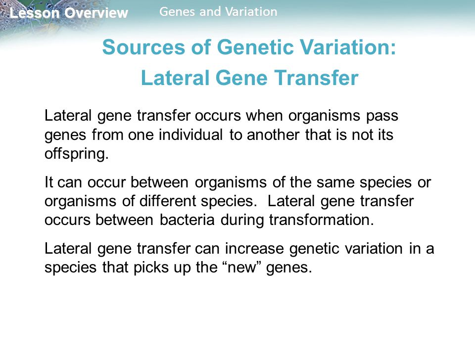 Lesson Overview Lesson Overview Genes and Variation Sources of Genetic Variation: Lateral Gene Transfer Lateral gene transfer occurs when organisms pass genes from one individual to another that is not its offspring.
