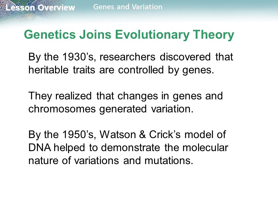 Lesson Overview Lesson Overview Genes and Variation Genetics Joins Evolutionary Theory By the 1930's, researchers discovered that heritable traits are controlled by genes.