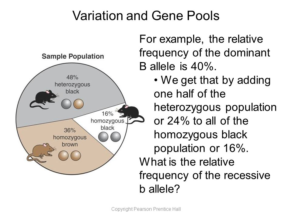 Copyright Pearson Prentice Hall Variation and Gene Pools For example, the relative frequency of the dominant B allele is 40%.