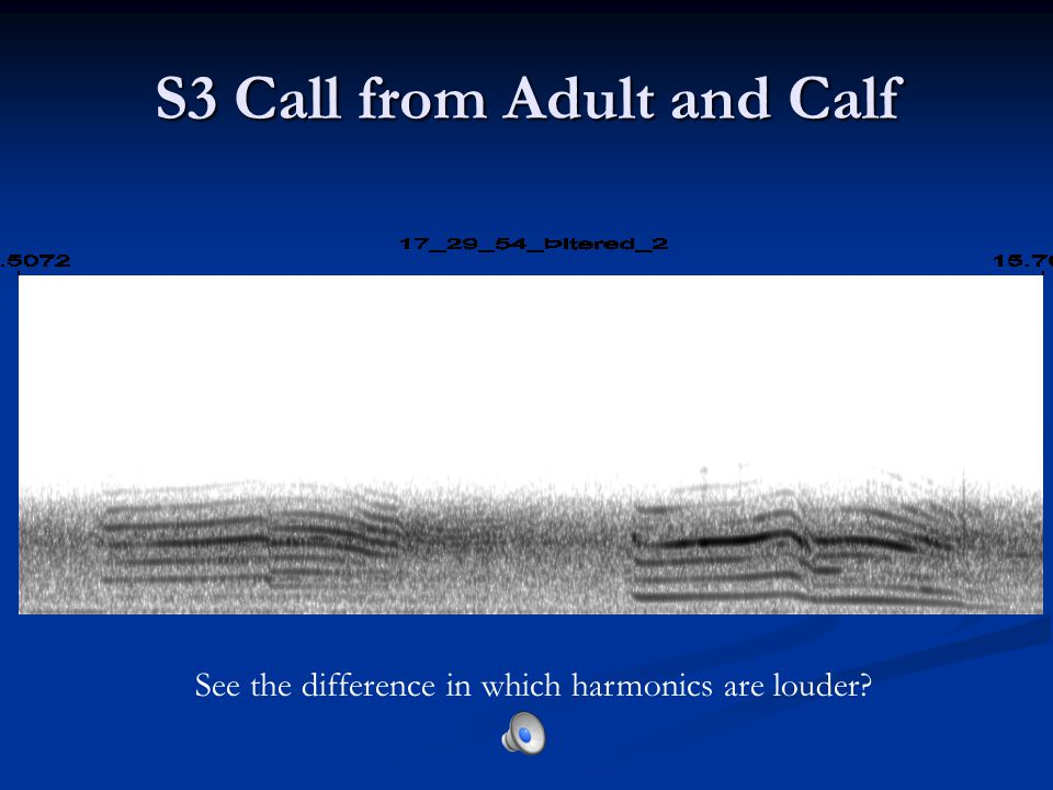 S3 Call from Adult and Calf See the difference in which harmonics are louder
