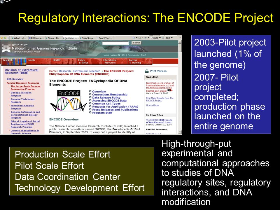 Regulatory Interactions: The ENCODE Project 2003-Pilot project launched (1% of the genome) 2007- Pilot project completed; production phase launched on