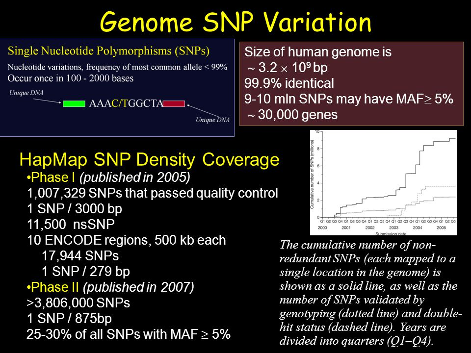 Genome SNP Variation Size of human genome is  3.2  10 9 bp 99.9% identical 9-10 mln SNPs may have MAF  5%  30,000 genes Phase I (published in 2005
