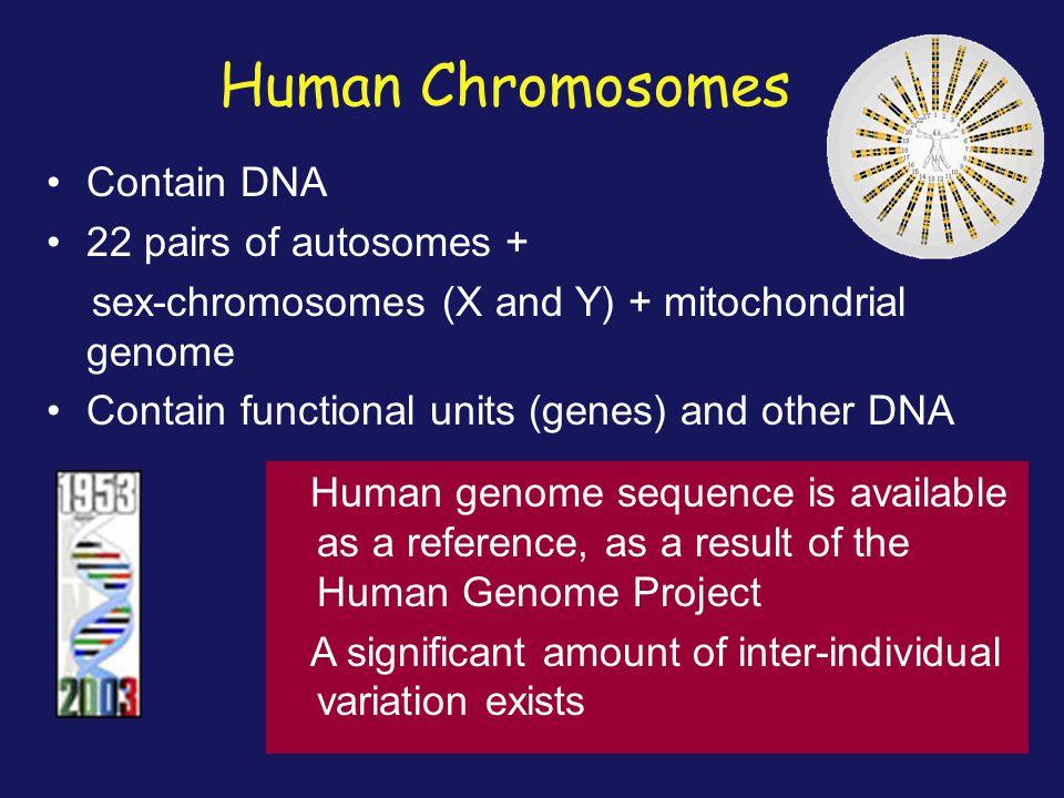 Segmental duplications are recombination hotspots, causing global genome rearrangements