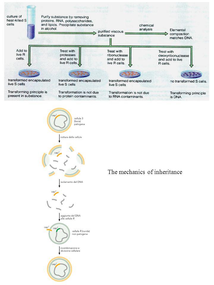 The mechanics of inheritance