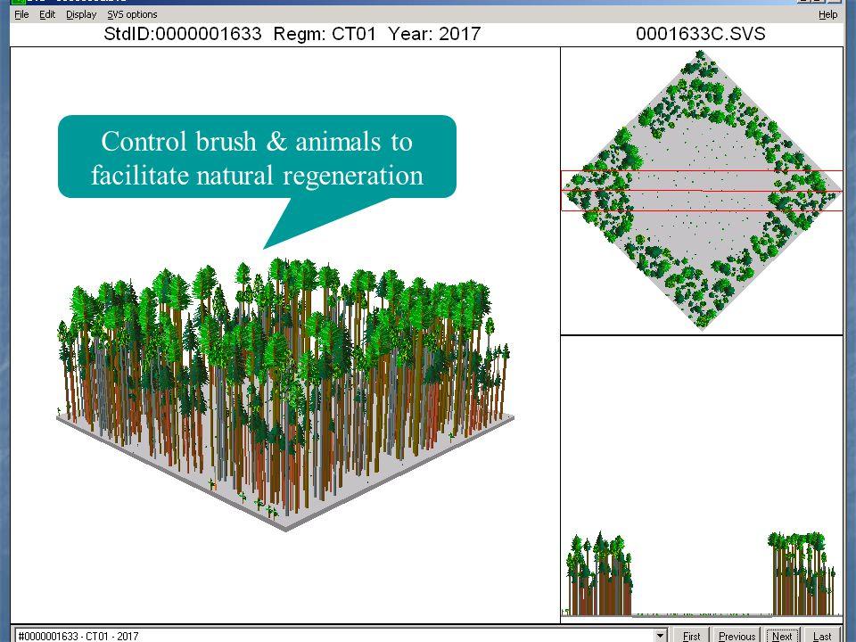 Control brush & animals to facilitate natural regeneration