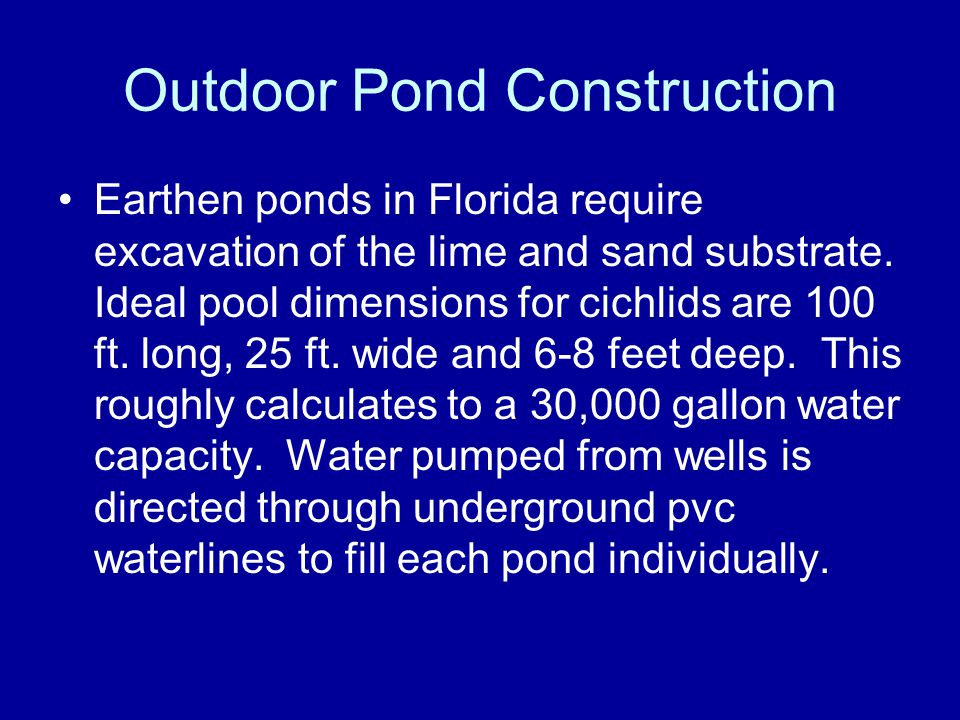 Outdoor Pond Construction Earthen ponds in Florida require excavation of the lime and sand substrate. Ideal pool dimensions for cichlids are 100 ft. l