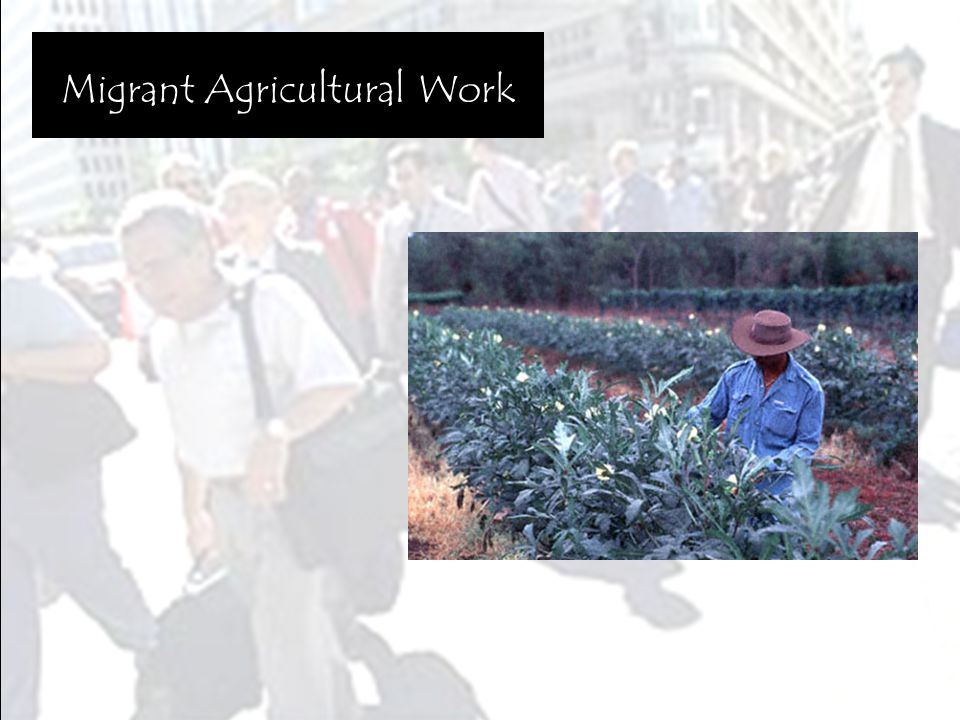 Migrant Agricultural Work