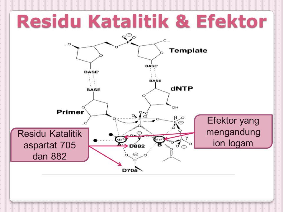 Residu Katalitik & Efektor Residu Katalitik aspartat 705 dan 882 Efektor yang mengandung ion logam
