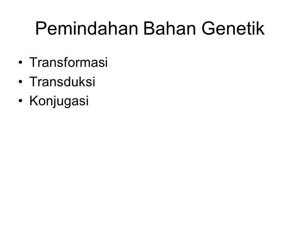 Pemindahan Bahan Genetik Transformasi Transduksi Konjugasi