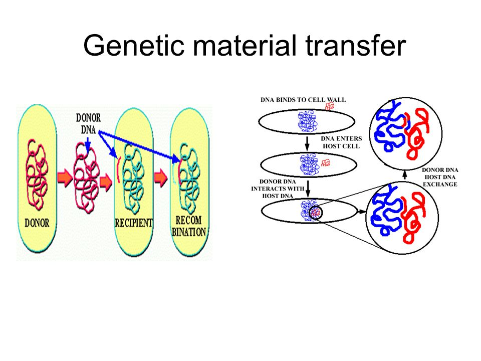 Genetic material transfer