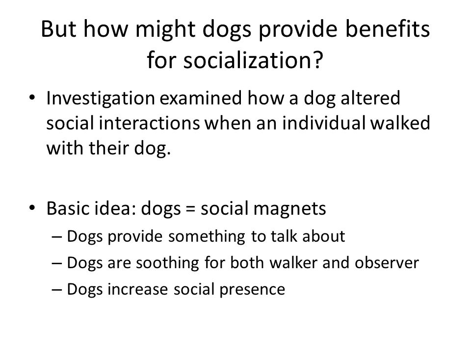 But how might dogs provide benefits for socialization? Investigation examined how a dog altered social interactions when an individual walked with the
