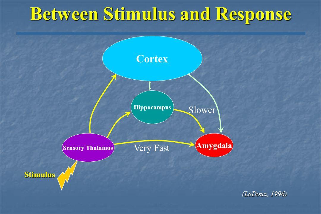 Between Stimulus and Response Stimulus Sensory Thalamus Amygdala Very Fast (LeDoux, 1996 (LeDoux, 1996)