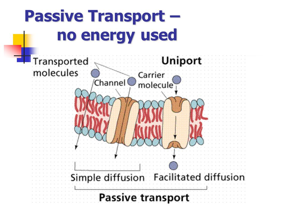 Passive Transport – no energy used