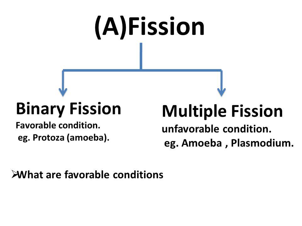 (A)Fission Binary Fission Favorable condition.eg.