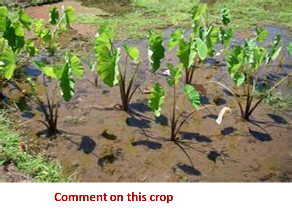 Comment on this crop