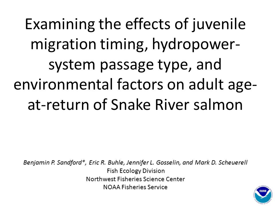 Examining the effects of juvenile migration timing, hydropower- system passage type, and environmental factors on adult age- at-return of Snake River salmon Benjamin P.